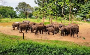 The Udawalawe Elephant Transfer Home